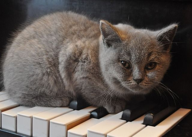 5 cats who inspired musicians